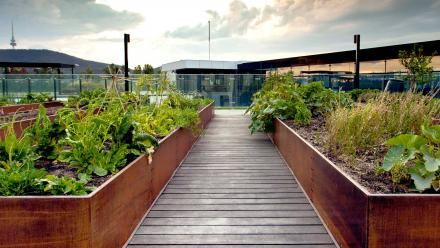 Roof top vegetable patch