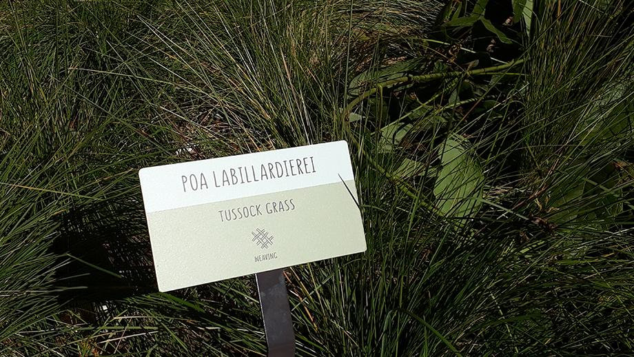 Each plant in the garden has a label which identifies the ways they are used by Aboriginal people