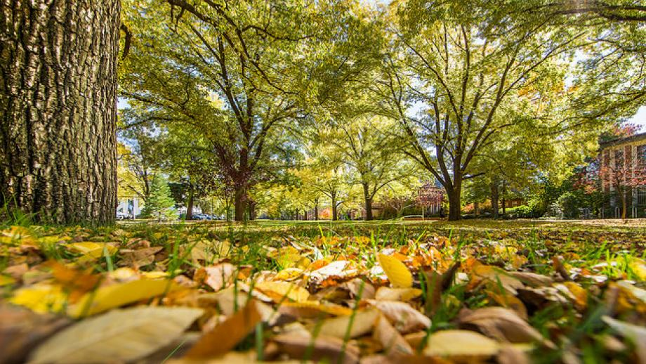 Trees and grass, ANU campus