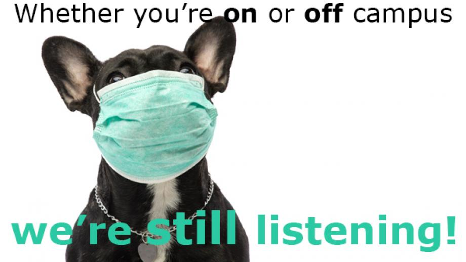 A dog wearing a surgical mask