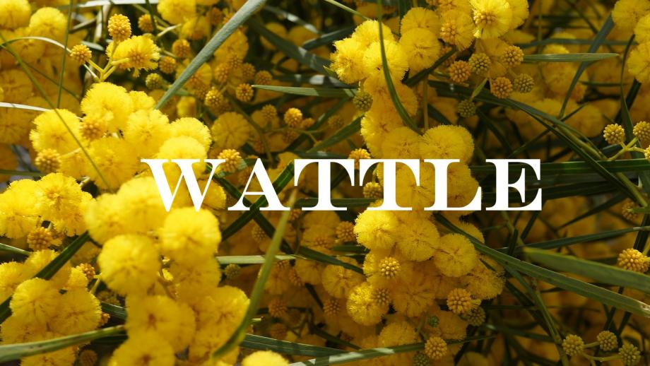 Wattle Staff Services Anu